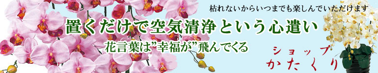 「UDD触媒」人工観葉植物で消臭・抗菌!