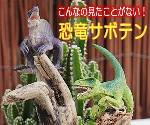 こんなの見たことない!恐竜ジオラマサボテン